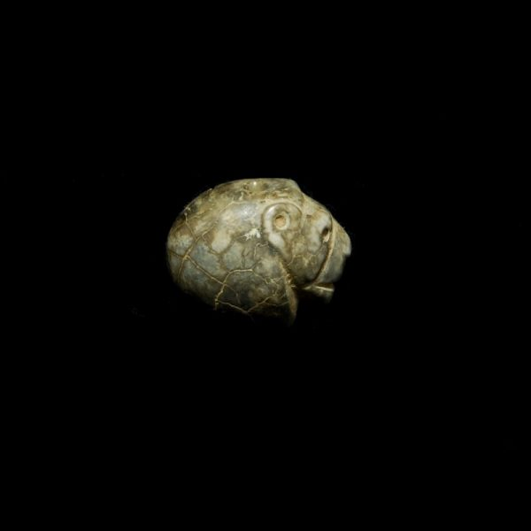 Lion Seal