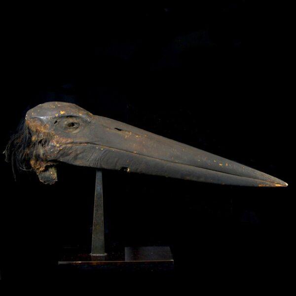 Mummified Head of a Stork