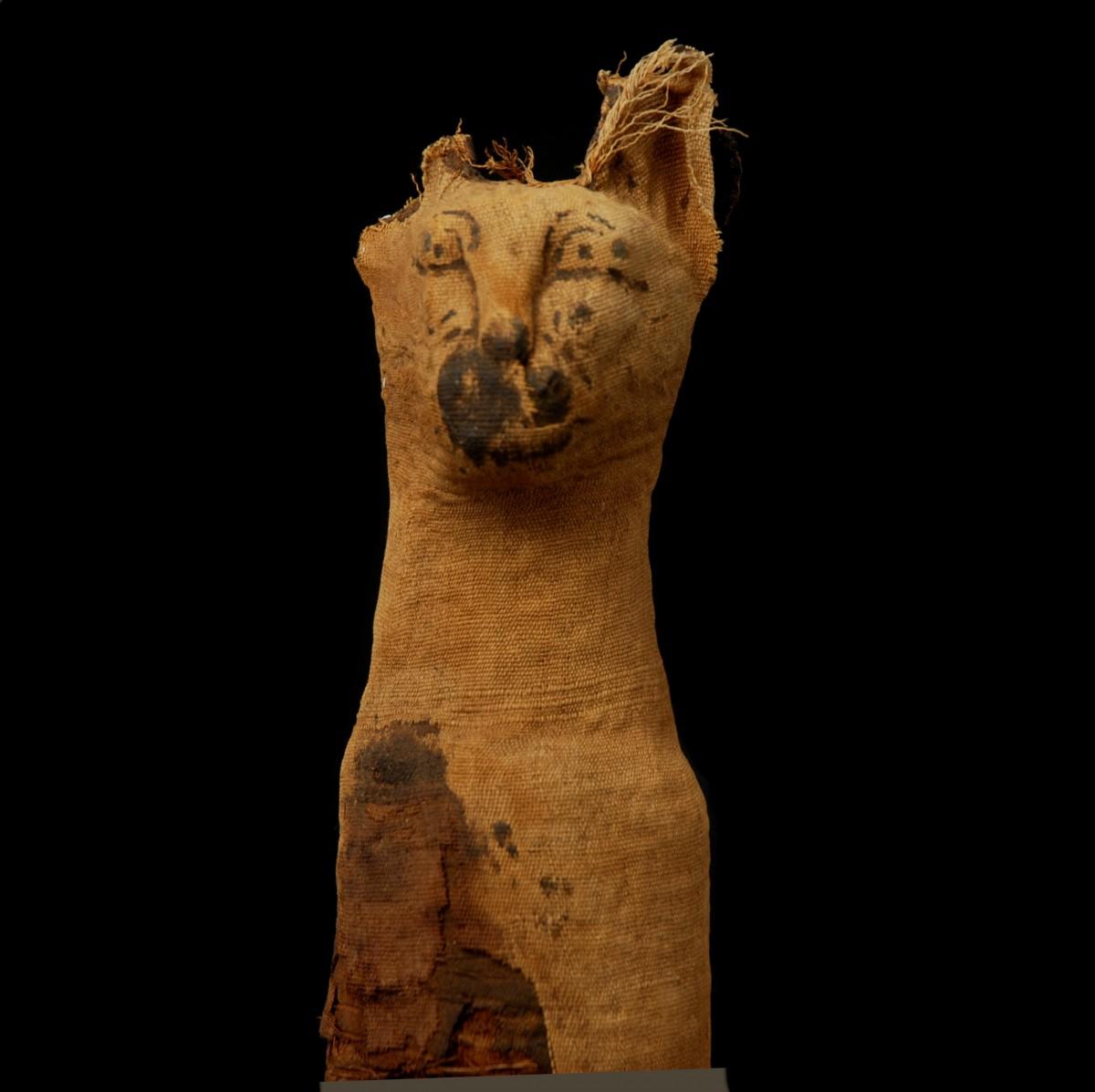 Egyptian mummified cat detail
