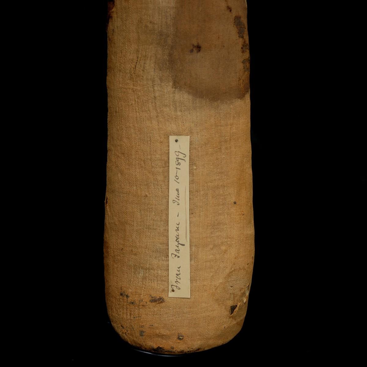 Egyptian mummified cat provenance detail